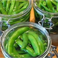 bocaux haricot vert